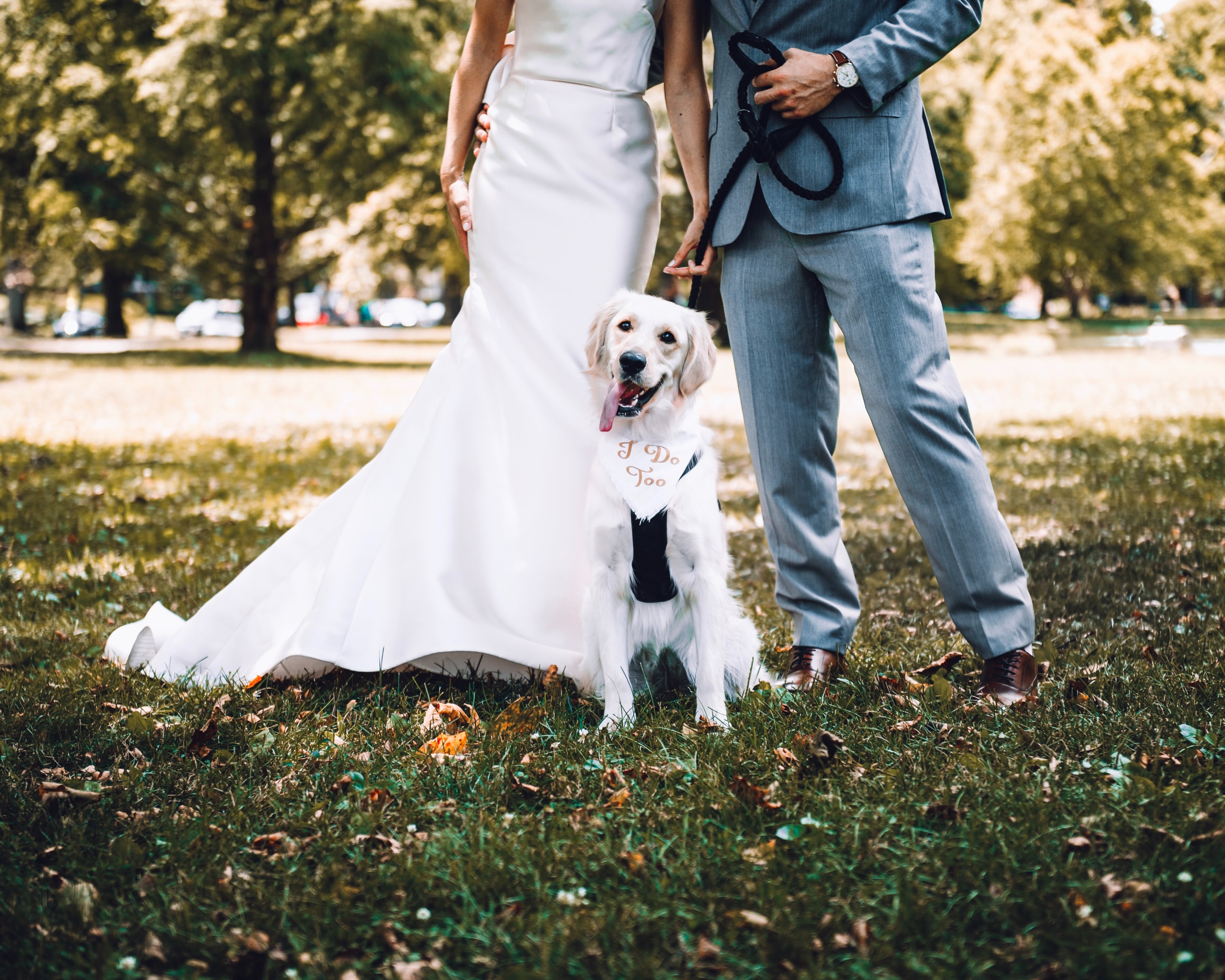 How To Involve Man's Best Friend In Your Wedding
